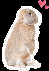 ウサギのイメージ0