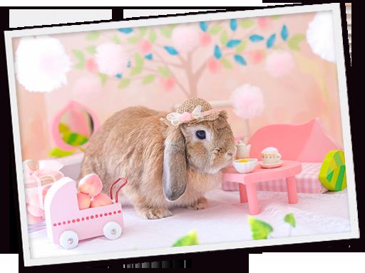 ウサギ写真01