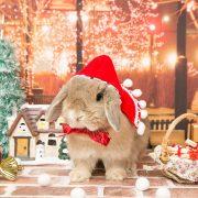 とある童話のクリスマス