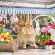 春の香りがするお花屋さん