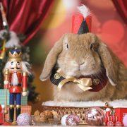 くるみ割り人形のクリスマスステージ